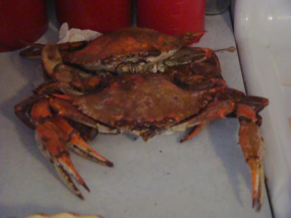 Crab Sex 48