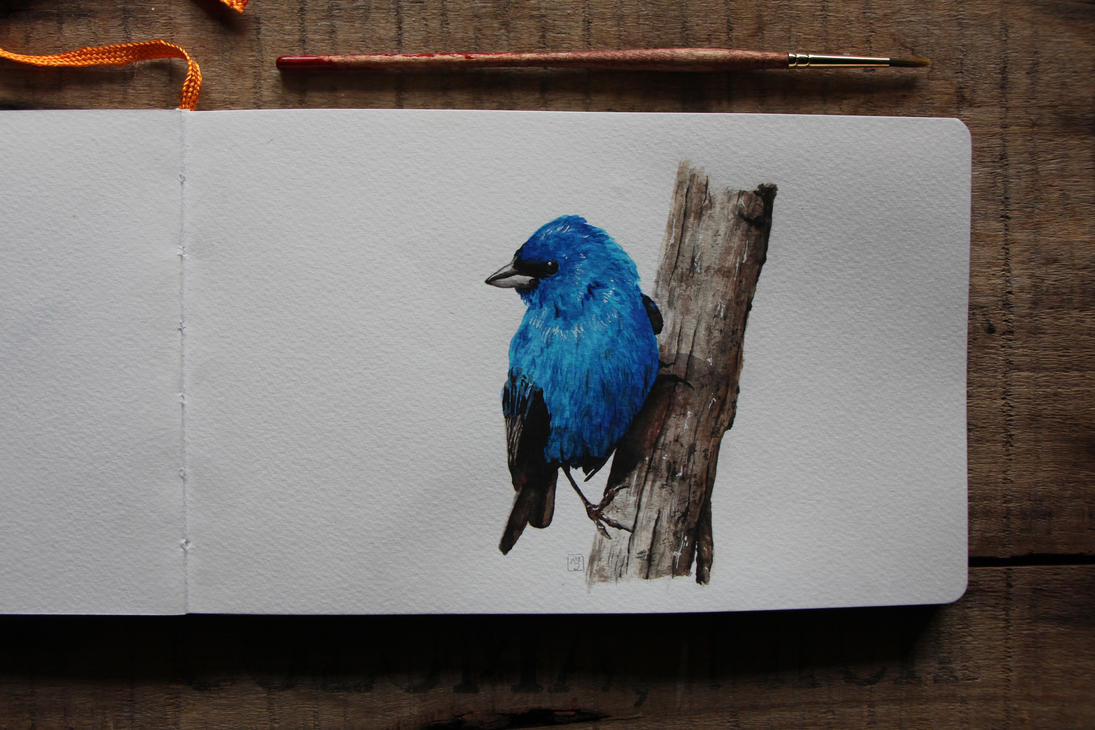 Indigo Bunting by floral-dragons