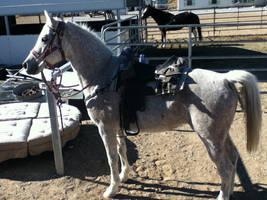 Misty with Saddle by AthenaIce