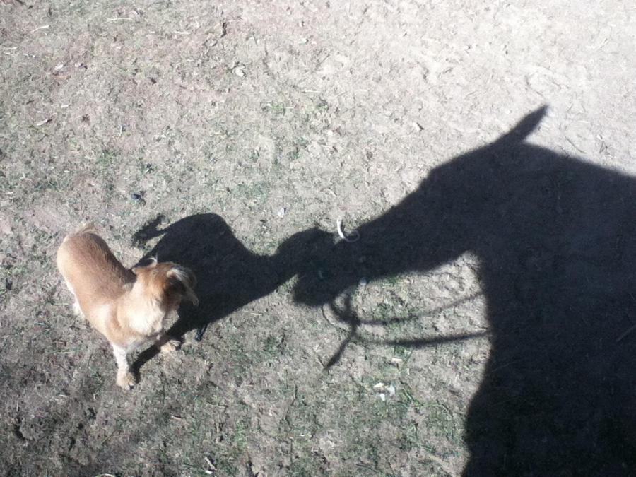 Touching Shadows by AthenaIce
