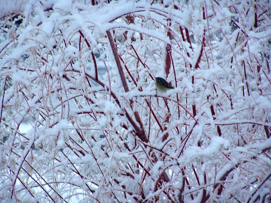 Snow Bird by AthenaIce