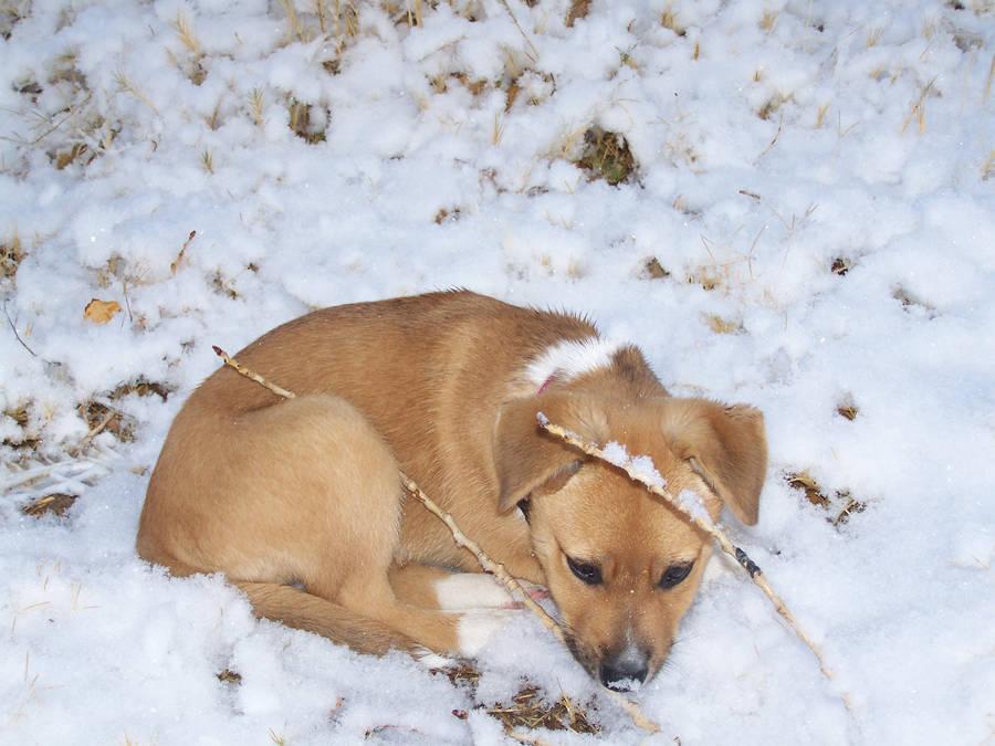 Snow Dog Sleeps by AthenaIce