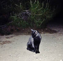 My Black Panther by AthenaIce