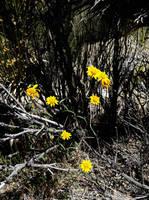 Yellow Delight by AthenaIce