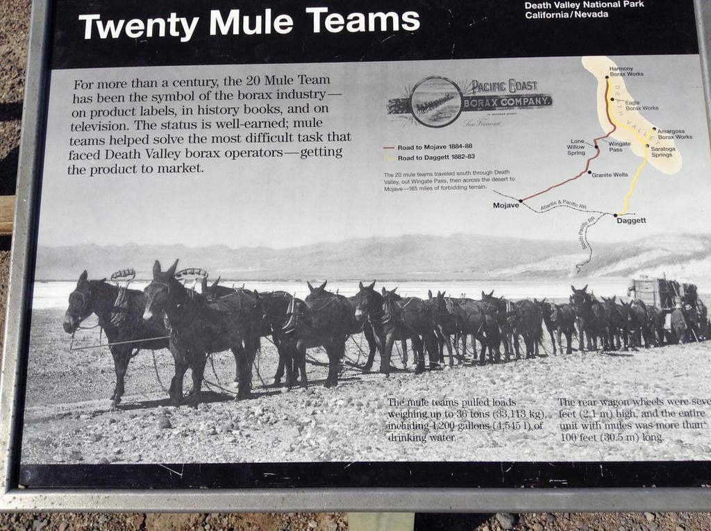 20 Mule Team by AthenaIce