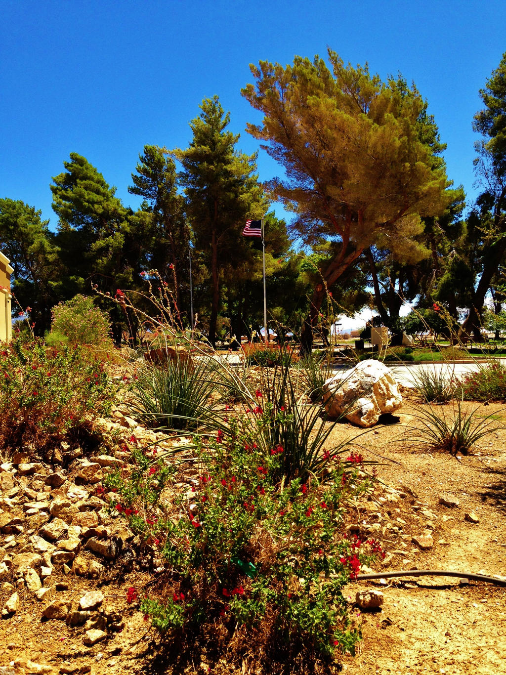 Desert Park by AthenaIce