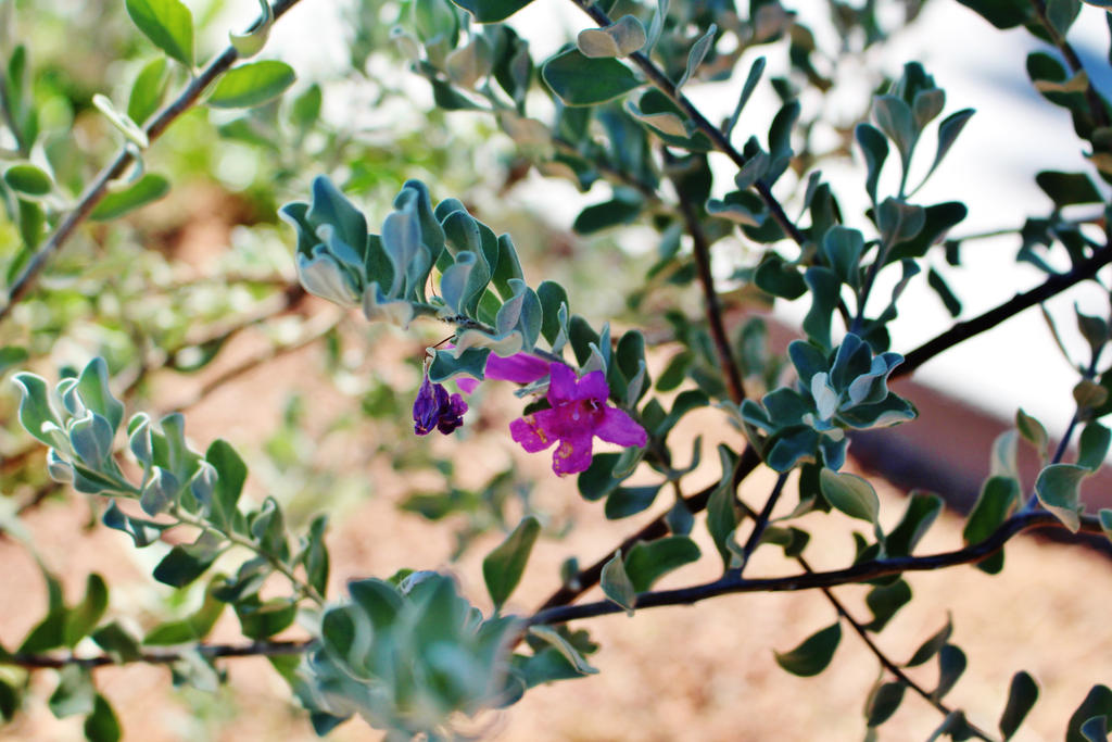 Purple Flower by AthenaIce