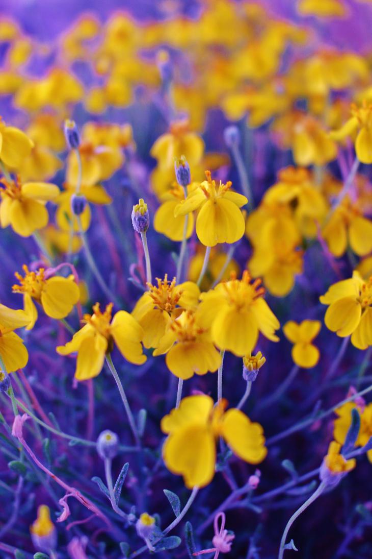 desert flowers by AthenaIce