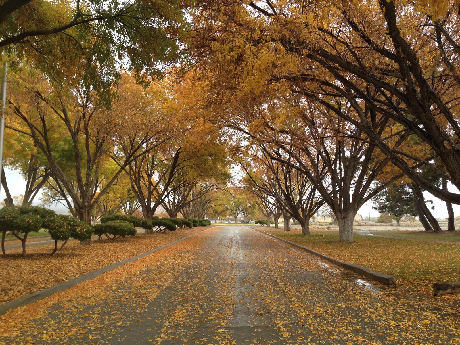 Down Memory Lane by AthenaIce