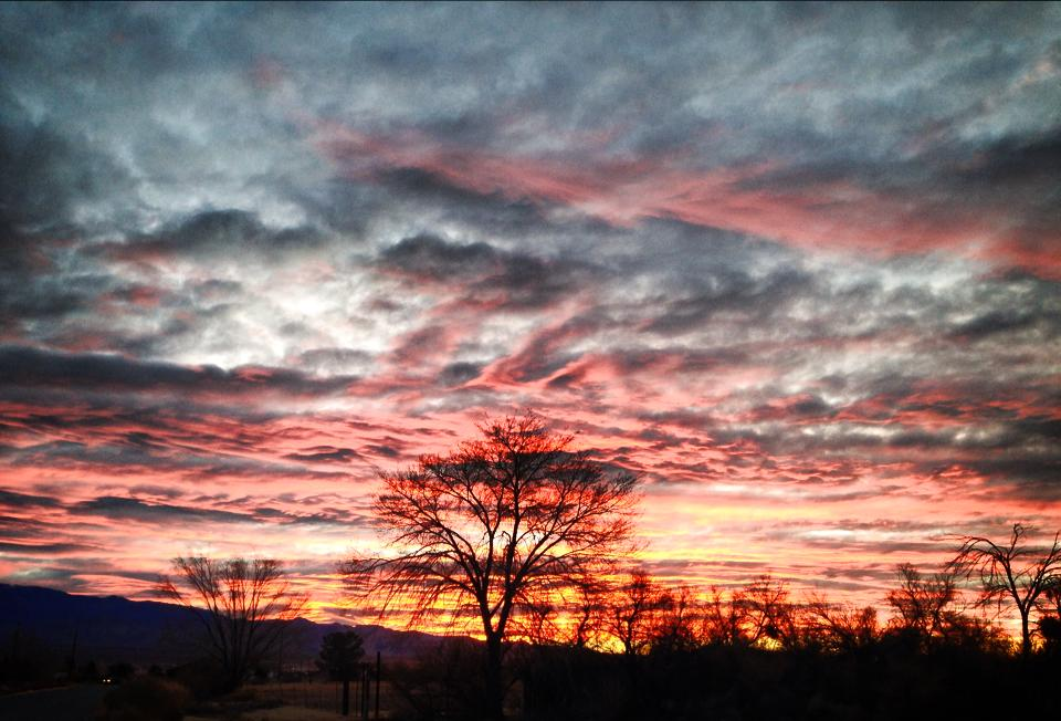 Morning Glory by AthenaIce