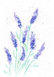 Lavender by izmysli