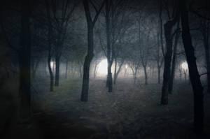 dark forests by Husckarl