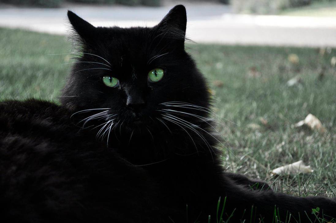 White Cat Site Www Novels Net