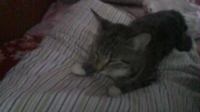 My Second Kitty Critty by delightfulphilos78