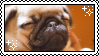 Pug Puppy Stamp by dopesic