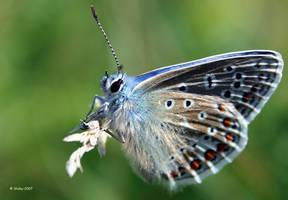 Butterfly by Slinky-2012
