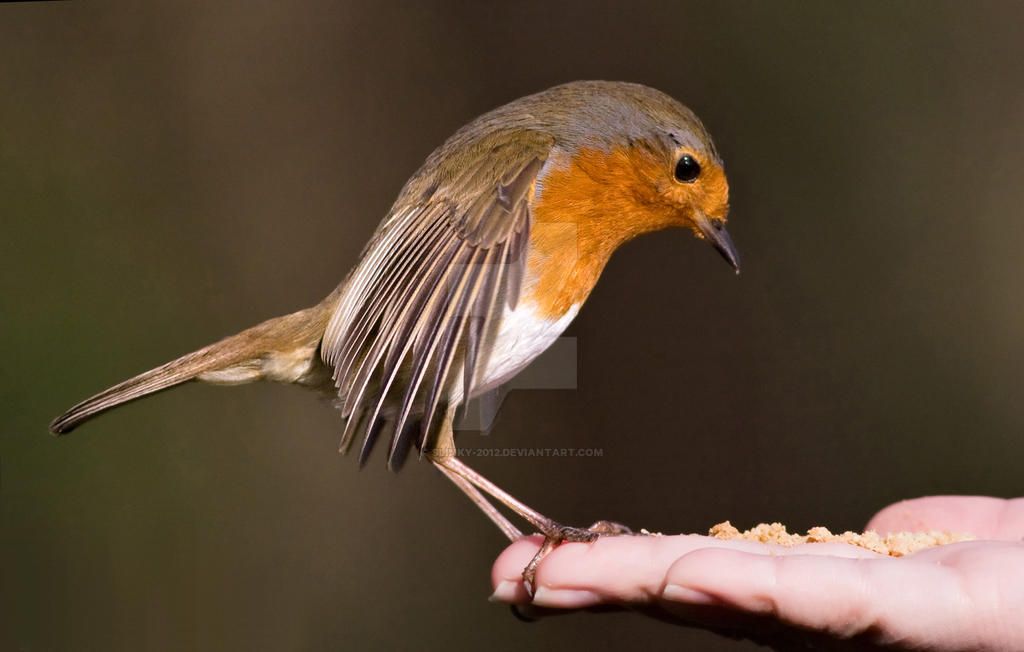 Red breast by Slinky-2012