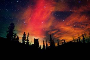 Stargazing cat by drastique44
