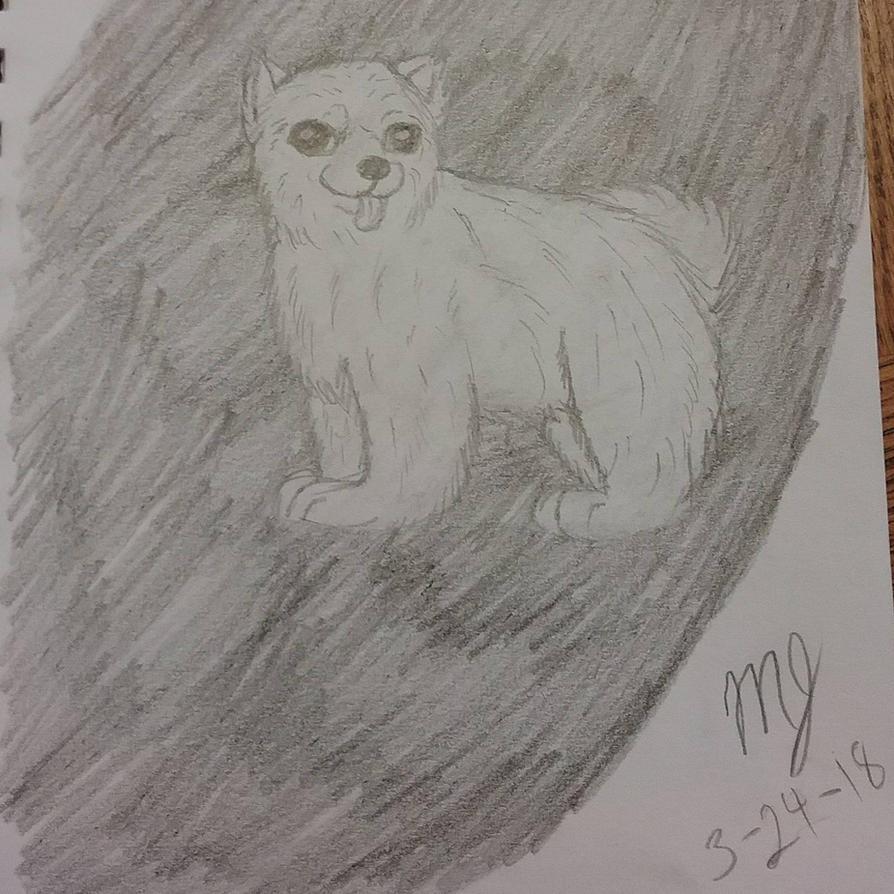 Pomeranian  by SUPERWOLF10