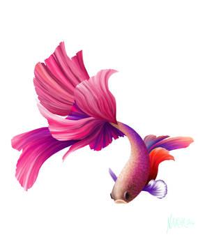 Rainbow Siamese Fighting Fish