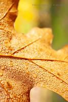 Autum Leaf in Dew Drops by MoonPriestessLaguz