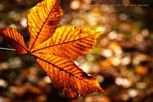 Golden Leaf by MoonPriestessLaguz