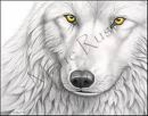 LunarWolf1994's Profile Picture