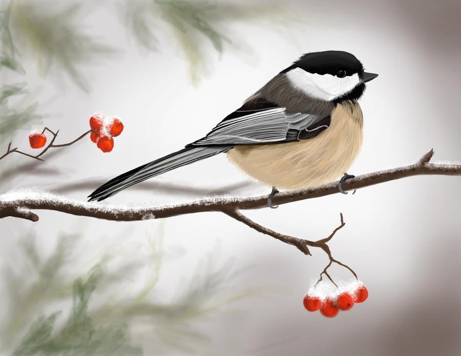 Winter bird images - photo#7