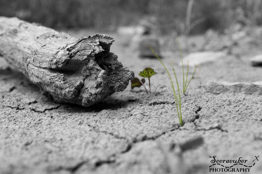 There is always hope. by Seeraeuber