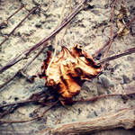 Dried Beauty