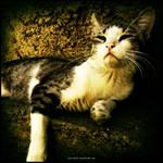 Praying Cat II