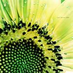 Sun of Garden