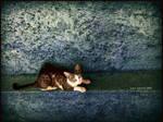Runner Cat