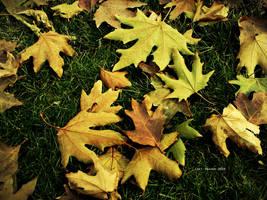 Fall by Last-Savior