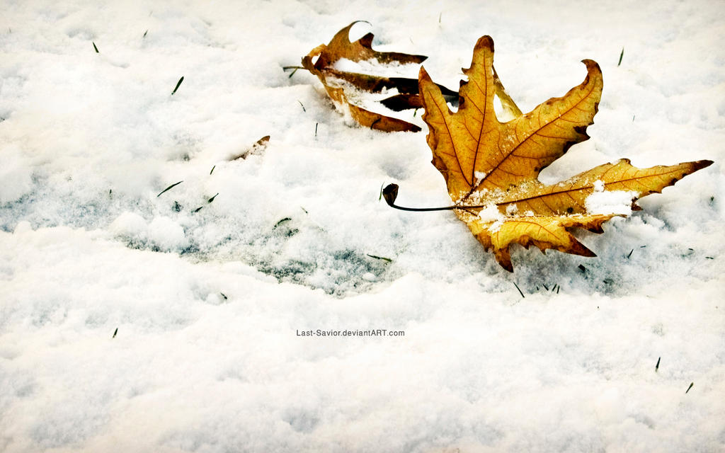 Winter Fall-Wallpaper by Last-Savior