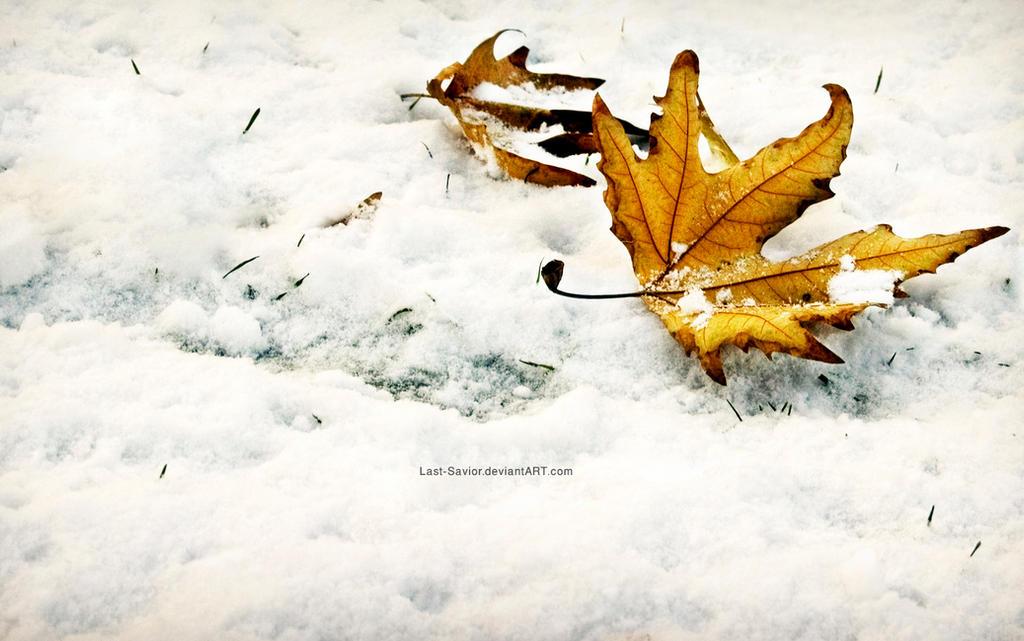 Winter Fall-Wallpaper