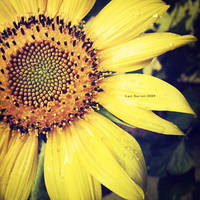 Sun Of Garden II by Last-Savior