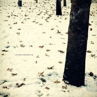 Winter Falls by Last-Savior