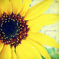 Sun of GardenIII by Last-Savior
