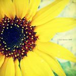 Sun of GardenIII