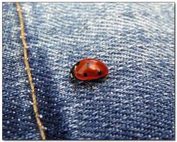 :: Ladybug ::