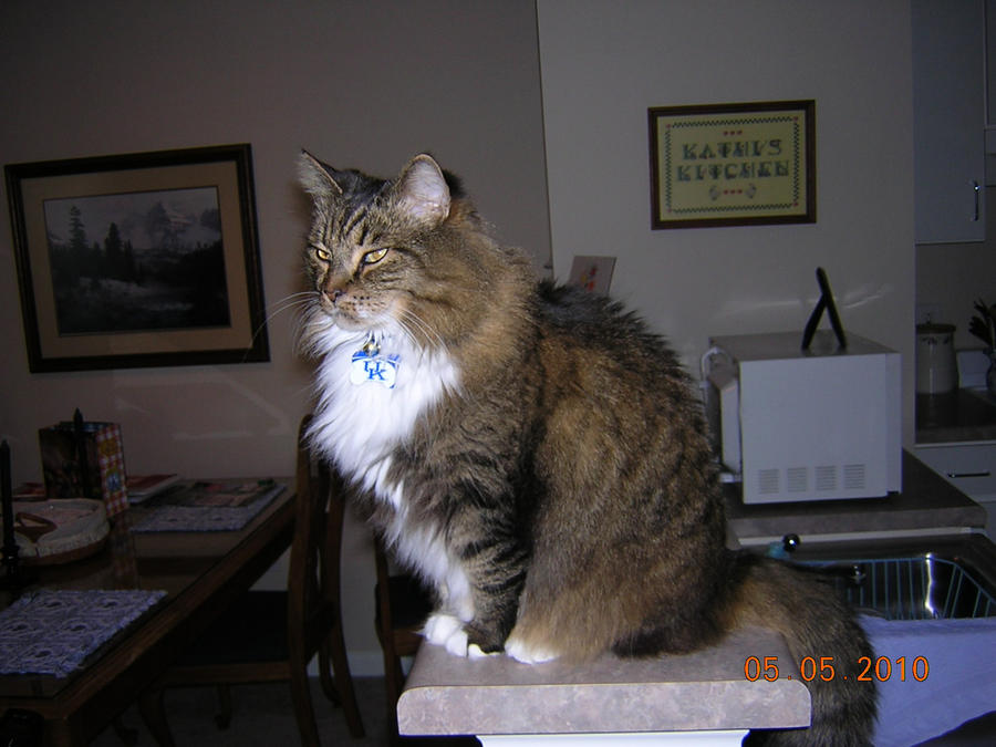 the proud cat noah by clayman0302 on DeviantArt