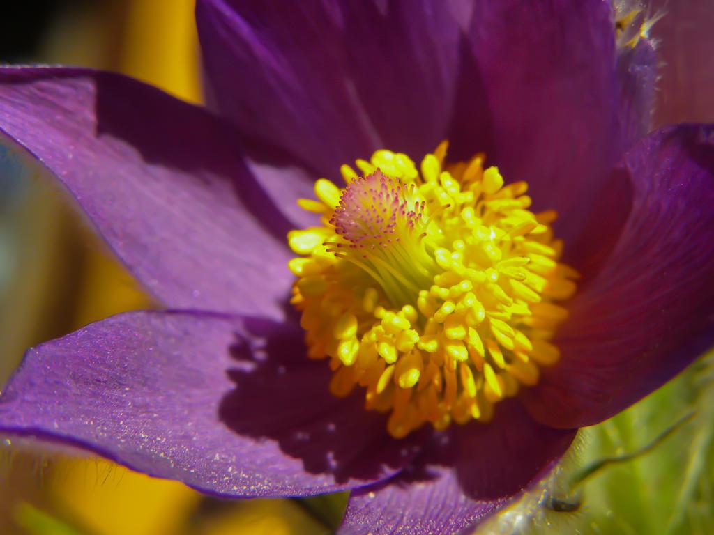 Perfect flower by AurorsX on DeviantArt