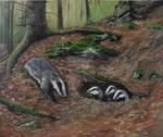 Jezevci - Badgers