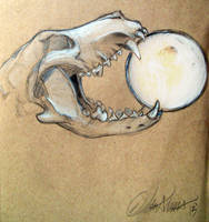 Wolf Skull by WolfSplicer