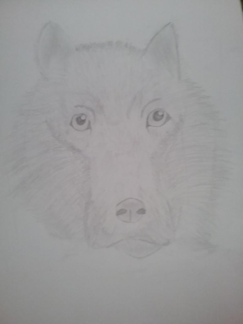 Wolf by Teddybear200