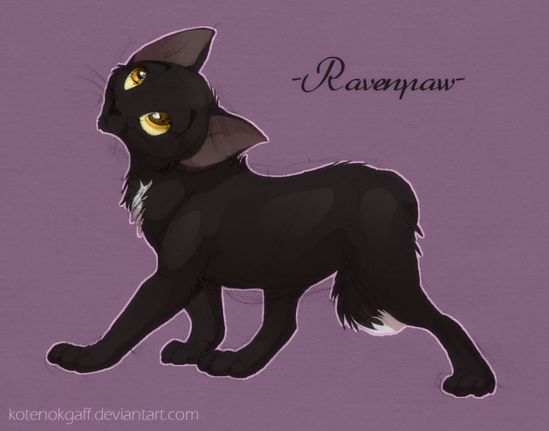 ravenpaw by kotenokgaff on -#main