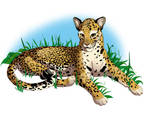 Leopard in the grass finished