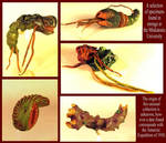 Lovecraft's Bugs