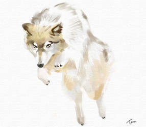 wolfdog by Teruchan